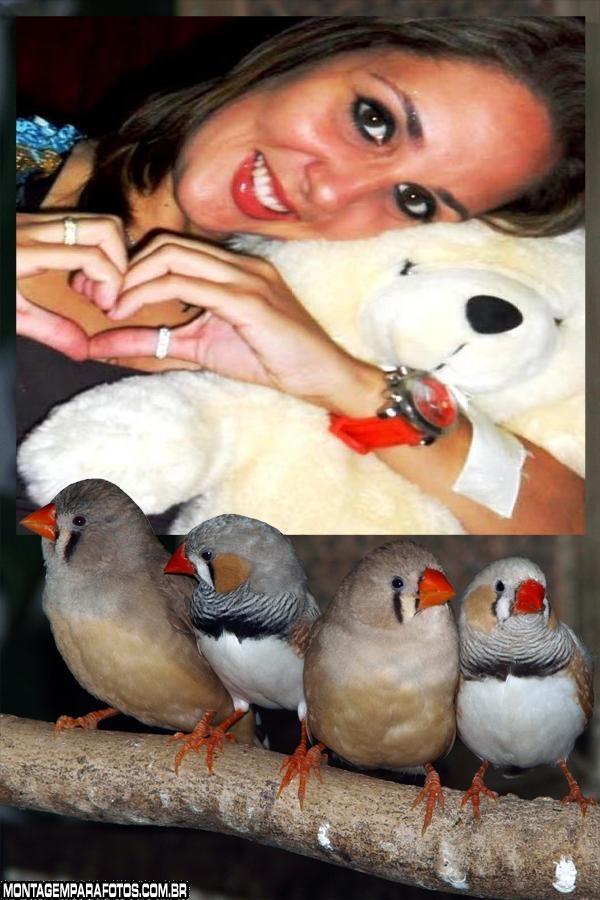 Moldura Quarteto de Pássaros