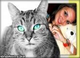 Moldura Gato Cinza Olhos Azuis