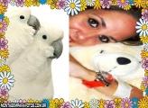 Casal de Papagaios Brancos
