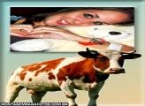 Moldura Vaca com Chifres